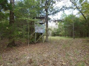 98 Acres with Cabin~ Attention Deer and Turkey Hunters!