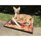 Bobcat & Squirrel Mount